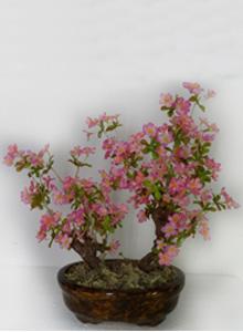 Бонсаи с цветами